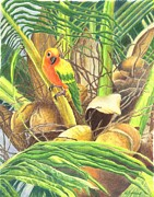 Drawing Jewelry - Parrot in Palm by Norma Gafford