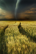Sandra Cunningham - Path in wheat fields with storm looming