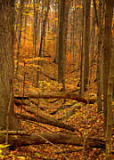 Shades State Park Prints - Path To The River Print by Ed Smith