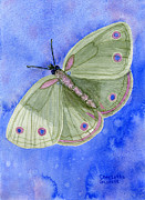Chakra Paintings - Peace Butterfly by Charlotte Garrett