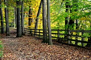 Elf Photo Prints - Peaceful Pathway Print by Robert Harmon