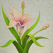 Peach Originals - Peach Lily by Carol Sabo