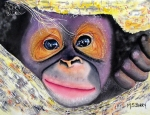 Orangutan Framed Prints - Peek A Boo Framed Print by Maria Barry