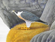 Falcon Mixed Media Originals - Peregrine Falcon On A Cliff by Alan Suliber