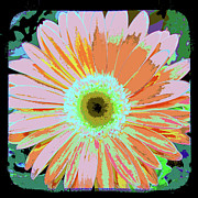 The View Mixed Media Posters - Photography art floral Poster by Ricki Mountain
