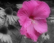Pink Hibiscus Partial Color Fine Art Print by Smilin Eyes Treasures