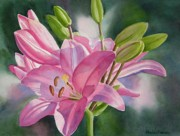 Sharon Freeman - Pink Lily with Buds