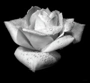 Jennie Marie Schell - Platinum Rose Flower