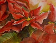 B Rossitto - Poinsettia