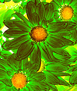 Amy Vangsgard - Pop Art Daisies 11