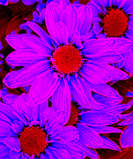 Amy Vangsgard - Pop Art Daisies 12