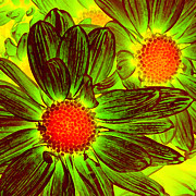 Amy Vangsgard - Pop Art Daisies 5