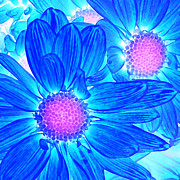 Amy Vangsgard - Pop Art Daisies 6