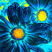 Amy Vangsgard - Pop Art Daisies 7