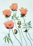 Barbara McMahon - Poppies