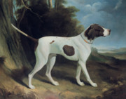 George Garrard - Portrait of a liver and white pointer