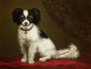 Anonymous - Portrait of a Spaniel