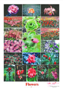 Peter L Wyatt - Poster - Flowers -1