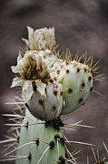 Saija  Lehtonen - Prickly Beauty