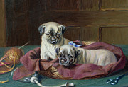 Horatio Henry Couldery - Pug Puppies in a Basket