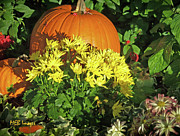 Flowers And Gardens - Pumpkins and Mums by Margaret Buchanan