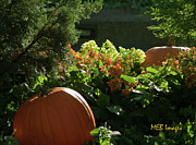 Flowers And Gardens - Pumpkins in Autumn by Margaret Buchanan