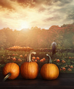 Sandra Cunningham - Pumpkins on table in farmer