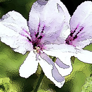 Purple Geranium Fine Art Print by Artist and Photographer Laura Wrede