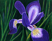 Barbara Griffin - Purple Iris