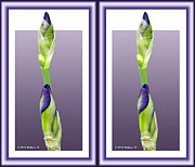 Crossview Framed Prints - Purple Iris Buds - Gently cross your eyes and focus on the middle image Framed Print by Brian Wallace