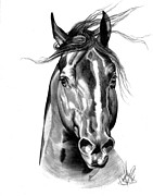 Drawing Of A Horse Head Framed Prints - Quarter Horse Head Shot in Bic Pen Framed Print by Cheryl Poland