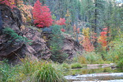 Autumn Leaf Prints - Rainbow of the Season with River Print by Heather Kirk