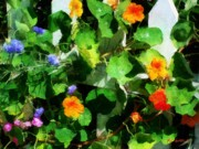 RC DeWinter - Rainbow  Riot