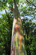 Enchanted Photos - Rainbow tree by Pierre Leclerc