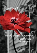 JAMART Photography - RED FLOWER quote
