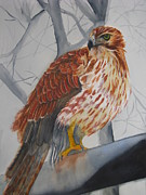 Red-tailed Hawk Paintings - Red Tail Hawk by Emmanuel Turner