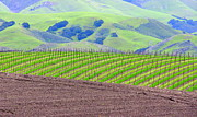 Wine Making Posters - Rich Vineyard and Lush Green Hills Poster by Jeff Lowe