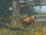 Gray Paintings - Ringneck Pheasant by Jeff Brimley