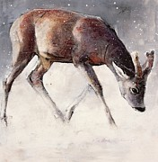 Mark Adlington  - Roe Buck - Winter