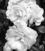 Jennie Marie Schell - Rose Bouquet Black and White