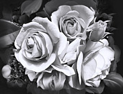 Jennie Marie Schell - Rose Flower Bouquet Black and White