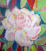 Patricia Taylor - Rose in Bloom