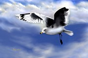 Gull Against Sky Prints - Ruffled Feathers Print by Dale   Ford
