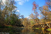 Barbara Bowen - Rustic Boardwalk at Blue Springs Run