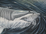 Sharks Paintings - Scarface- Great white shark by Max Teasdale