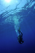 Diving Suit Prints - Scuba diver moving down in the blue water Print by Sami Sarkis