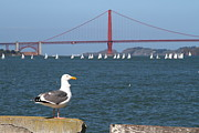 Wingsdomain Art and Photography - Seagull Enjoying The Sailboats On The...
