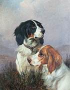 Colin Graeme - Setters on a Moor