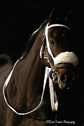 Keeneland Art - Shari Bomb by PJQandFriends Photography