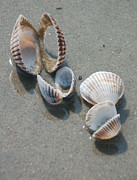 Suzanne Gaff - She Sells Sea Shells